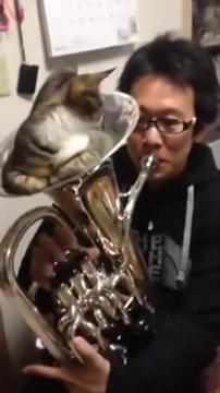 02-「おしりがムズムズするにゃ」猫が金管楽器の中で寝ているけどちょっと吹いてみた