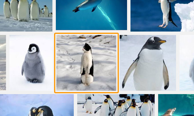 02-ペンギンと検索して出てきた画像に思わず二度見!わかるかニャ?