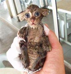 15-お風呂が嫌いな猫の不機嫌な写真15枚