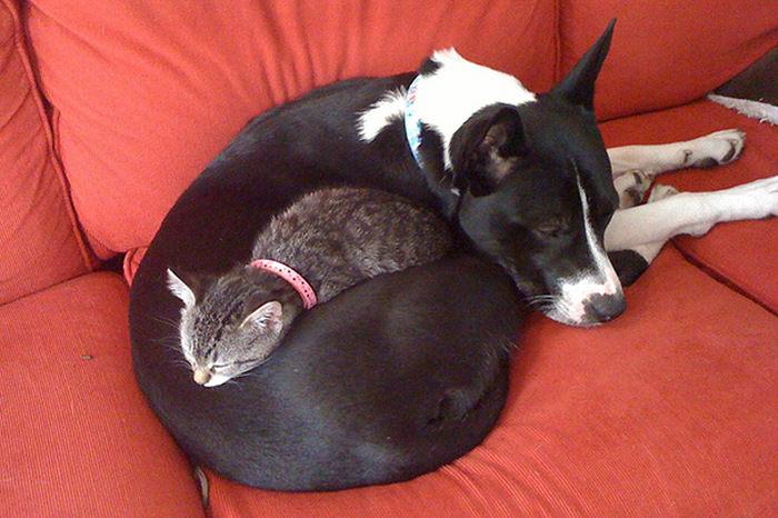 ずっと友だち! 猫と犬のすてきな関係!10