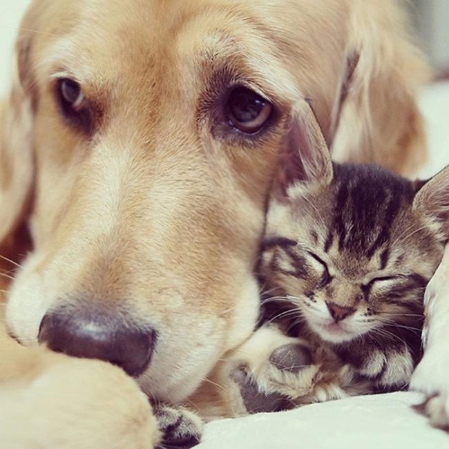 ずっと友だち! 猫と犬のすてきな関係!11