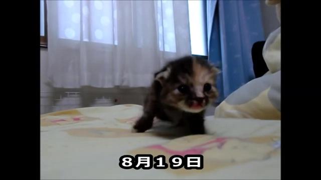 01-よちよち歩きの仔猫の成長記録。だんだん歩くのが上手になってる(#゚ロ゚#)