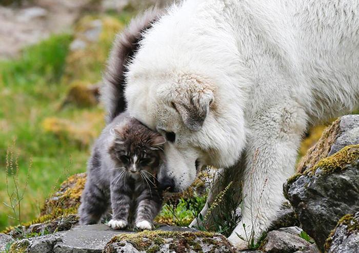 ずっと友だち! 猫と犬のすてきな関係!03