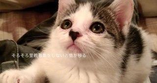 仔猫を保護し、里親へ出すまで 愛情いっぱいの1ヶ月間-thumb