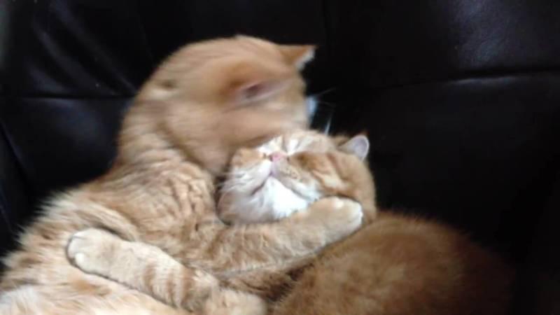 02-ツンデレな猫の兄弟の仲良し動画!気持ちの切り替え早すぎ!