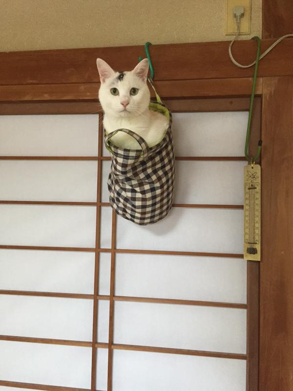 02-ミノムシみたいな猫が発見されTwitterで話題に!