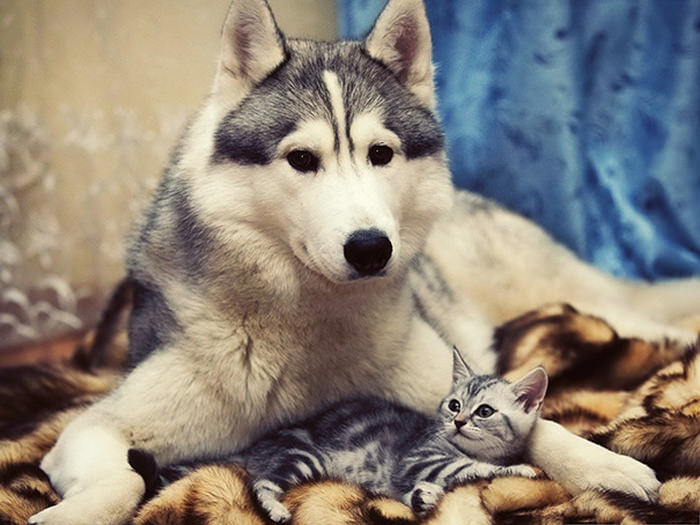 ずっと友だち! 猫と犬のすてきな関係!21