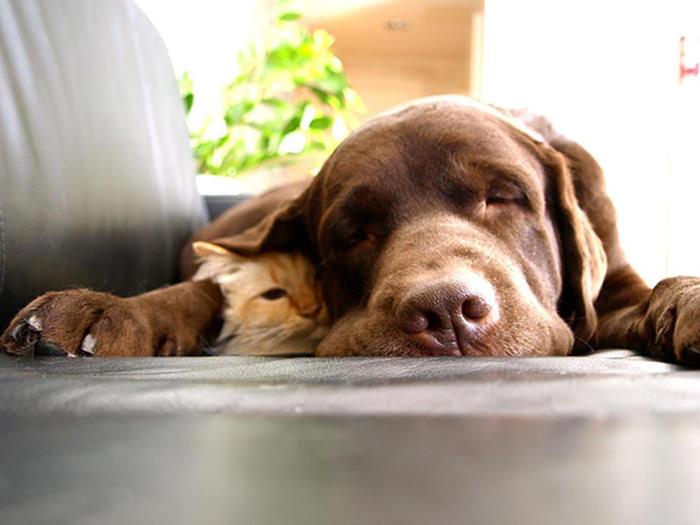 ずっと友だち! 猫と犬のすてきな関係!22