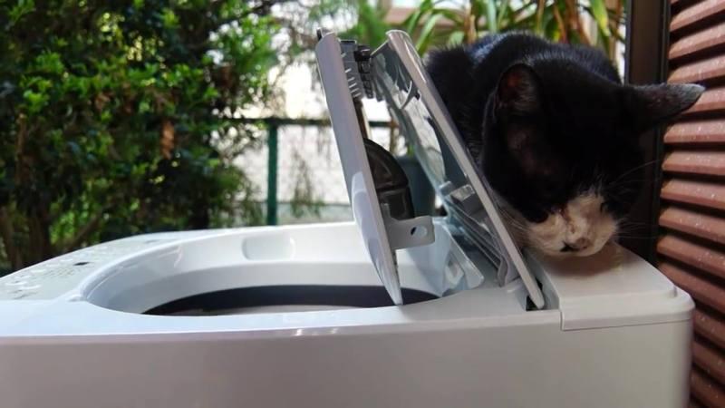 04-洗濯機の上から意地でもどかない!洗濯機の上が大好きな猫