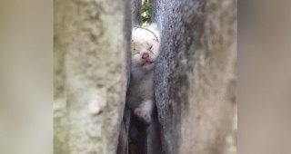 大きな石の間に挟まっているところを発見された仔猫。みんなで力を合わせて救出に成功!