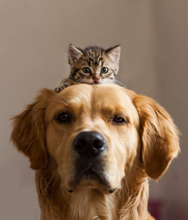 ずっと友だち! 猫と犬のすてきな関係!16