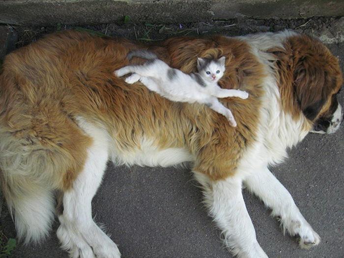 ずっと友だち! 猫と犬のすてきな関係!15