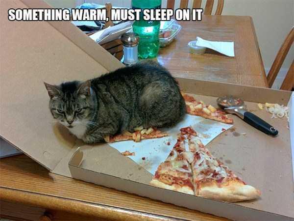 funny-cat-logic-16