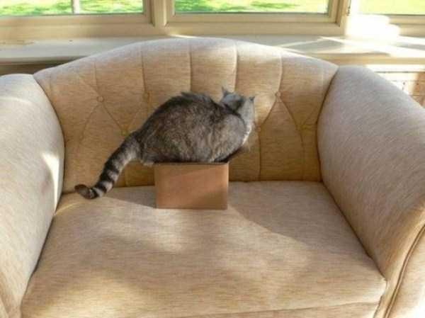 funny-cat-logic-25