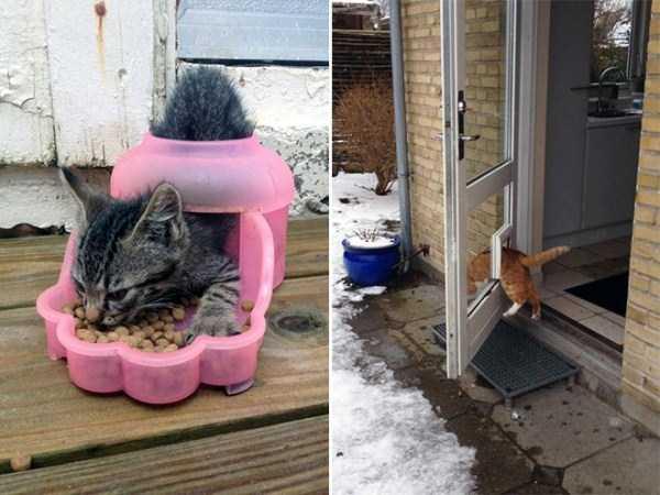 funny-cat-logic-4