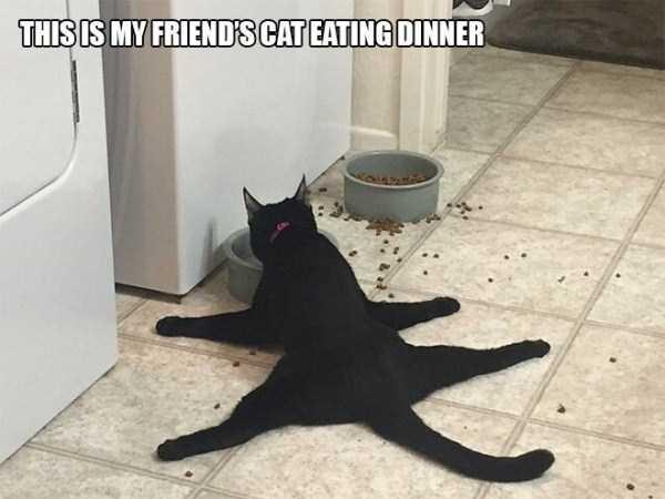 funny-cat-logic-5