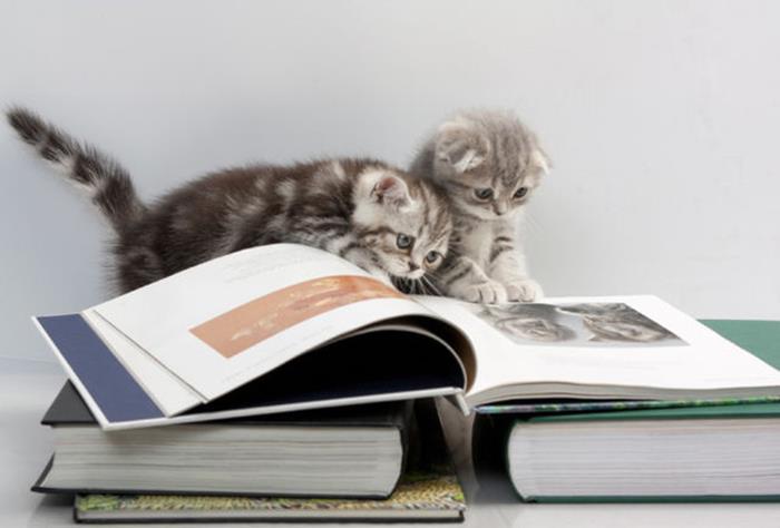 09-本好きのみなさんへ。読書が好きな猫たちはいかが?