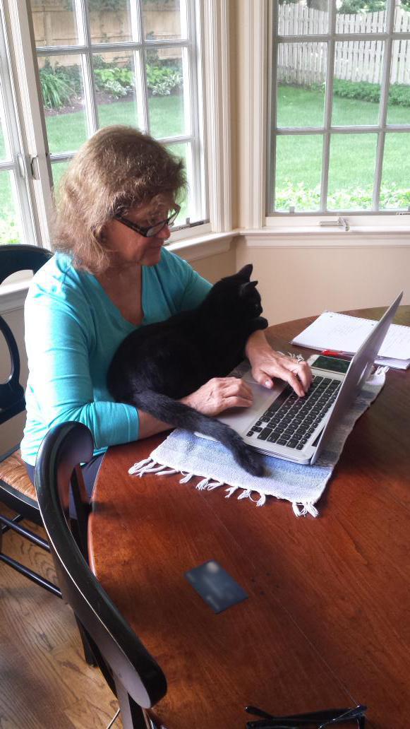 12-自宅で仕事する際の最大の敵はこいつです。アピールし過ぎな16匹の猫たち。.0