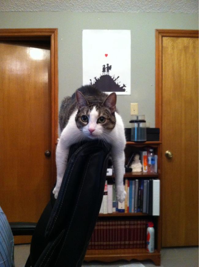 03-自宅で仕事する際の最大の敵はこいつです。アピールし過ぎな16匹の猫たち。.0