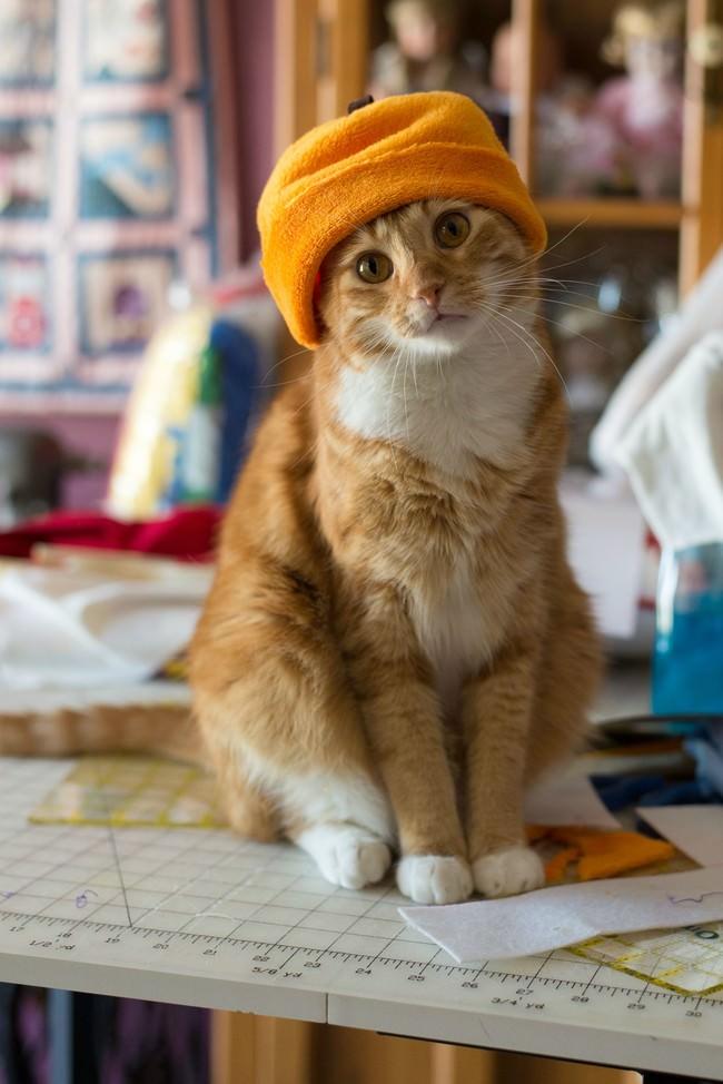 018-帽子をかぶったお洒落な猫たち。どの子が1番かわいい?