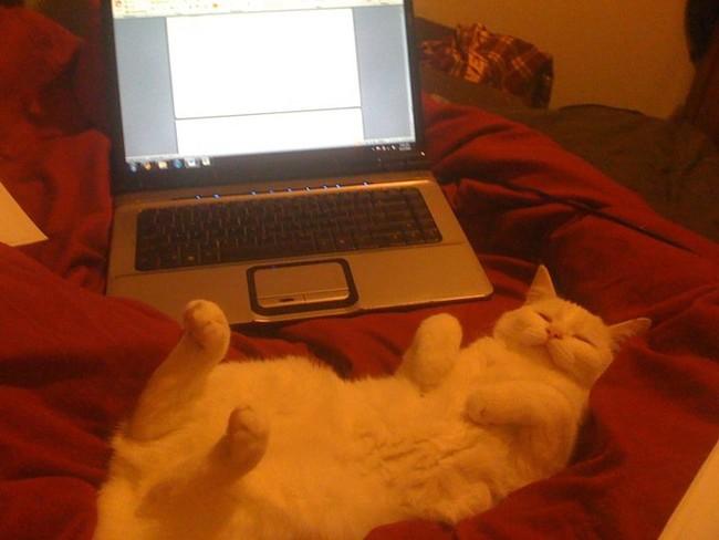 10-自宅で仕事する際の最大の敵はこいつです。アピールし過ぎな16匹の猫たち。.0