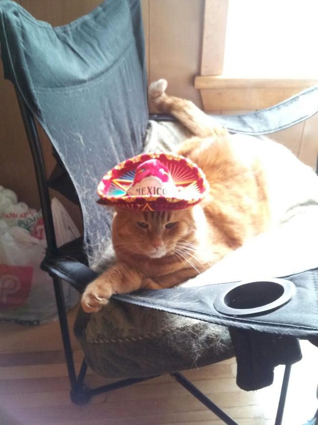017-帽子をかぶったお洒落な猫たち。どの子が1番かわいい?