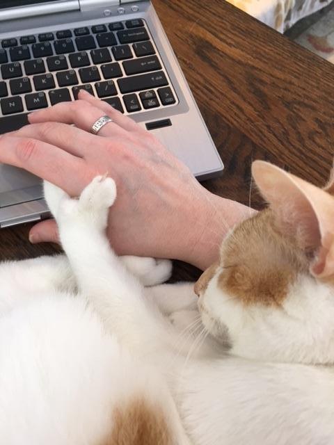 15-自宅で仕事する際の最大の敵はこいつです。アピールし過ぎな16匹の猫たち。