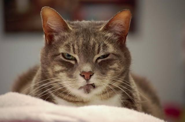 cats_that_are_scarily_evil_looking_640_05