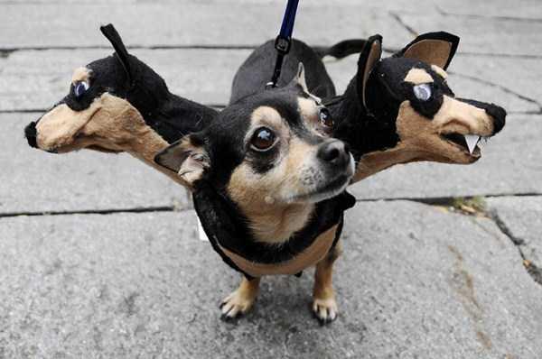 diy-halloween-pet-costumes-12
