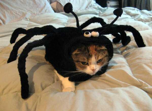 diy-halloween-pet-costumes-15
