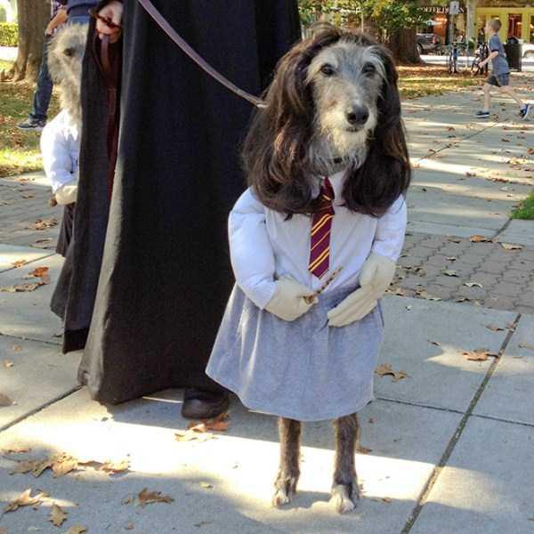 diy-halloween-pet-costumes-18