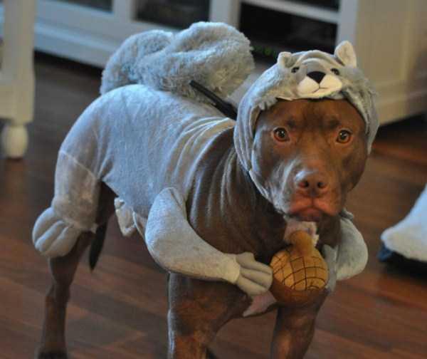 diy-halloween-pet-costumes-7