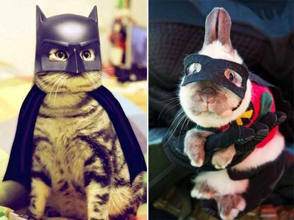 diy-halloween-pet-costumes-9