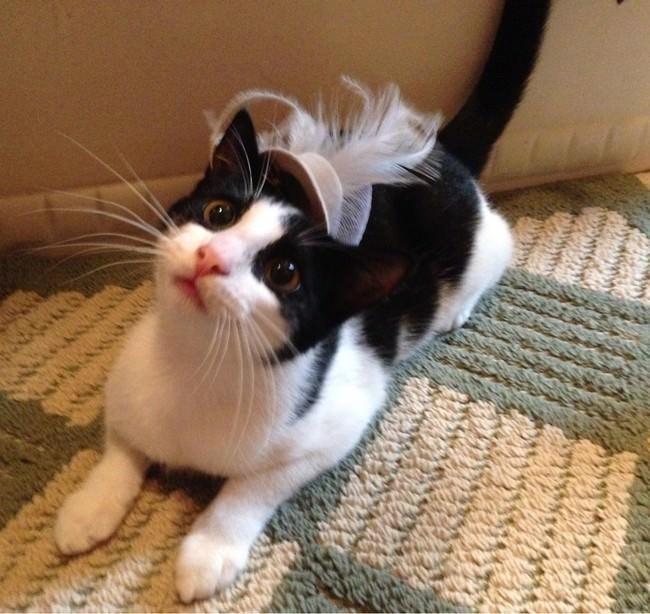 025-帽子をかぶったお洒落な猫たち。どの子が1番かわいい?
