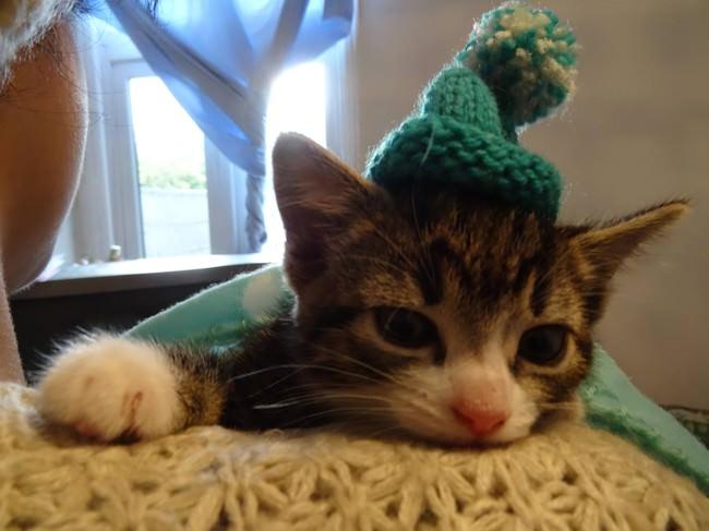 002-帽子をかぶったお洒落な猫たち。どの子が1番かわいい?