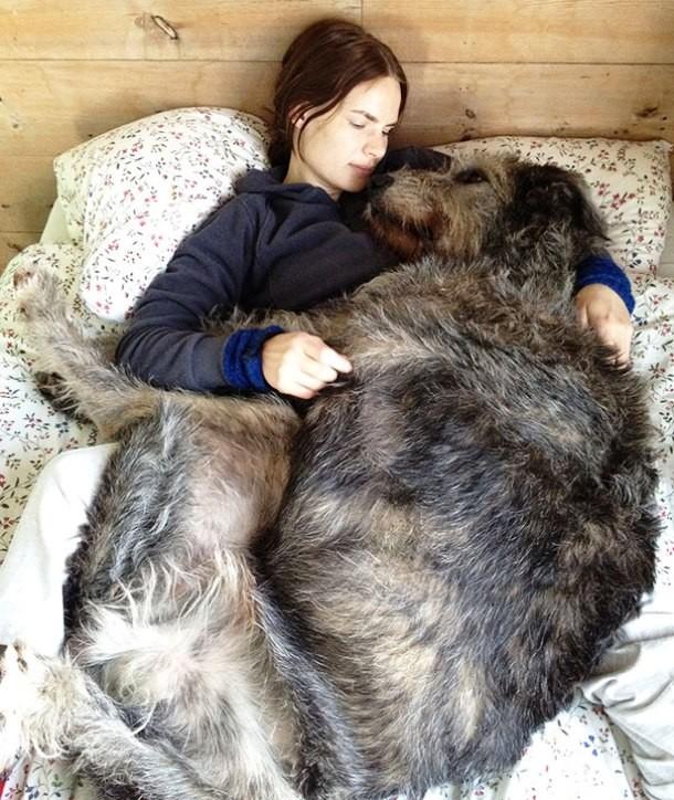 14-big-dog1-610x724
