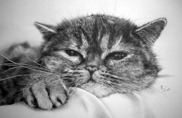 03-この16枚のネコ画像にはある秘密があります。ネコ好きのみなさんなら分かりますよね!