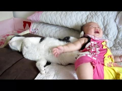 02-二人は仲良し!赤ちゃんにちょっかいだされるけど、ずっと寄り添ってあげる猫