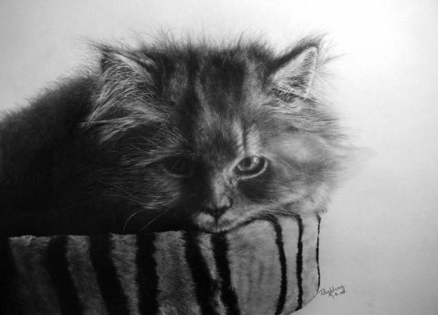 15-この16枚のネコ画像にはある秘密があります。ネコ好きのみなさんなら分かりますよね!