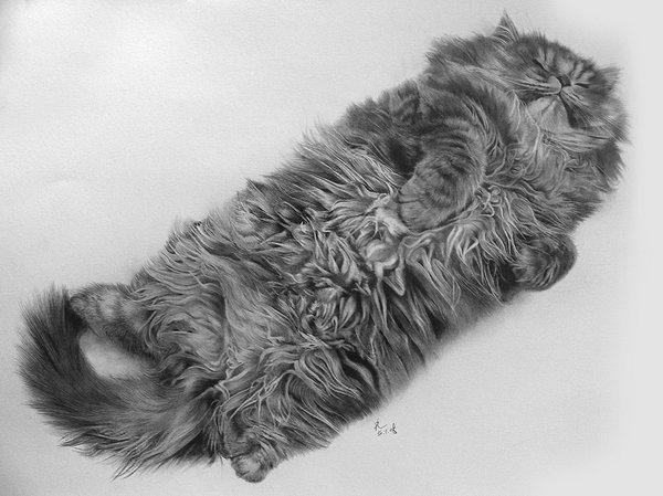 08-この16枚のネコ画像にはある秘密があります。ネコ好きのみなさんなら分かりますよね!