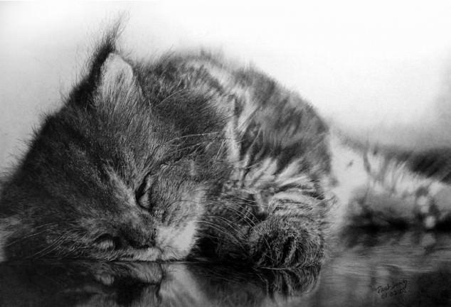 06-この16枚のネコ画像にはある秘密があります。ネコ好きのみなさんなら分かりますよね!
