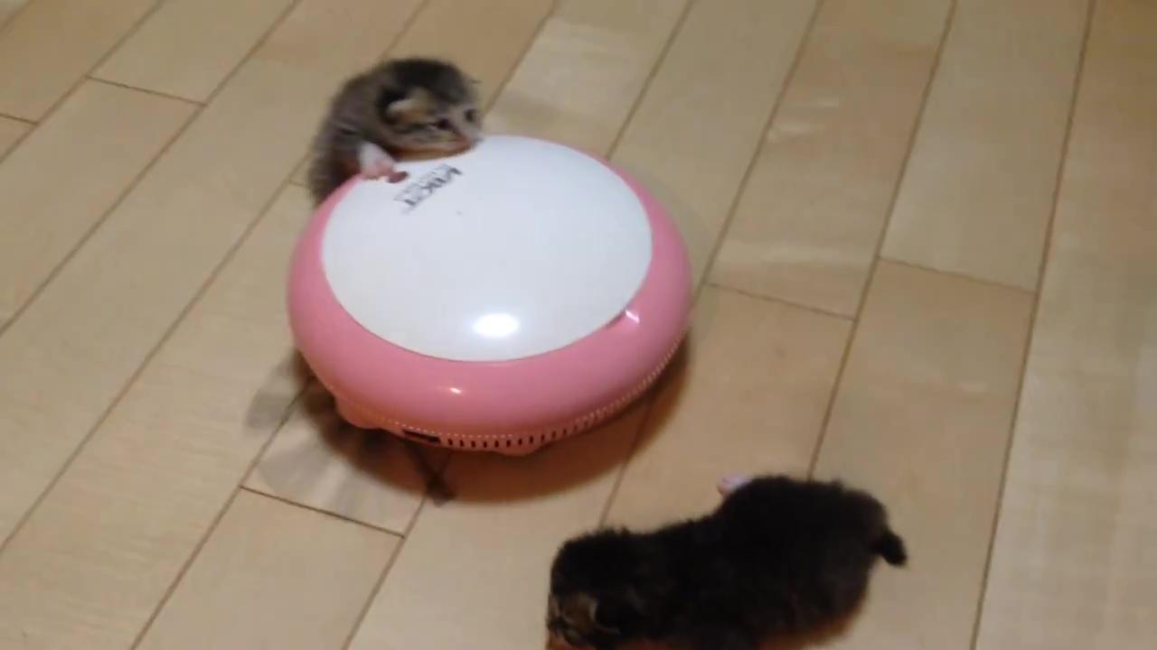 02-掃除機ロボットの上で遊ぶ子猫。滑って落ちても安心!だって優しく見守る家族がたくさんいるもの