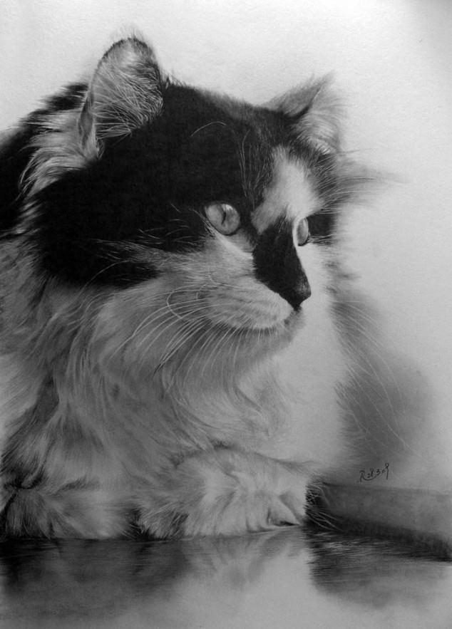 14-この16枚のネコ画像にはある秘密があります。ネコ好きのみなさんなら分かりますよね!