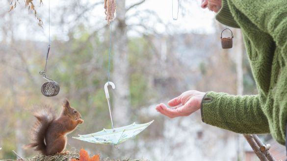 i-shoot-squirrels-in-my-backyard-and-i-can-almost-make-a-living-from-what-i-love-11__880