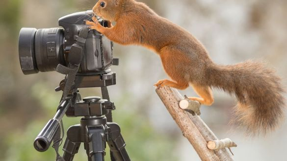 i-shoot-squirrels-in-my-backyard-and-i-can-almost-make-a-living-from-what-i-love-4__880