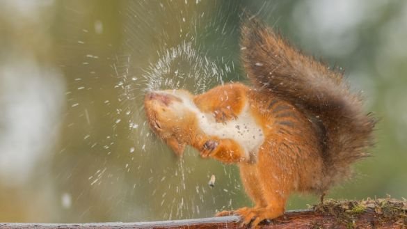 i-shoot-squirrels-in-my-backyard-and-i-can-almost-make-a-living-from-what-i-love-5__880