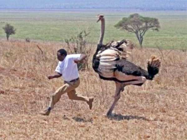 meanwhile-in-africa-26