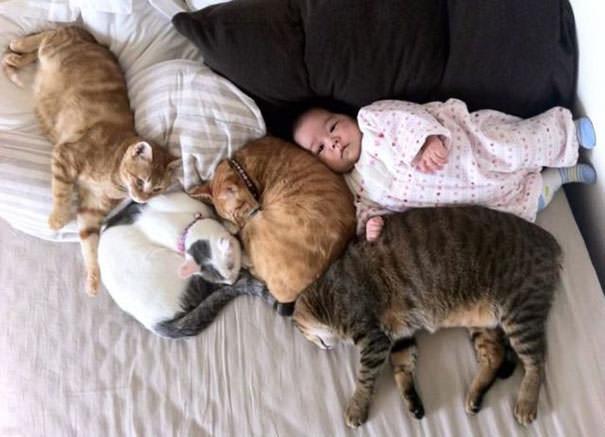 09-ほっこり20枚! 赤ちゃんとネコの仲良しな風景
