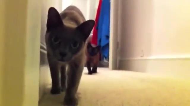 03-後半に注目! 油断してると怖い(笑) ネコとダルマさんが転んだで遊んでると・・・