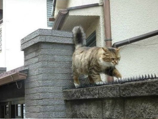 02-とげの山を越えてネコが向かったのは?-とってもほんわかな物語がありました!